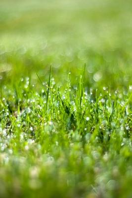 Wet spring grass