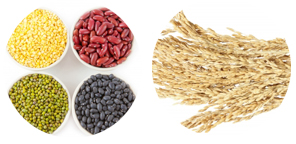legumes and grains
